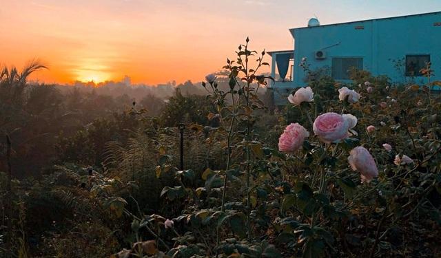 Cậu bé bóc mít thuê năm nào giờ là ông chủ vườn hồng đẹp như cổ tích - 3