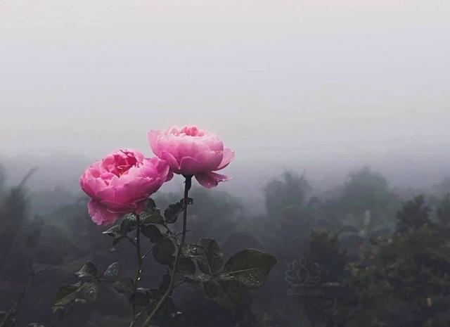 Cậu bé bóc mít thuê năm nào giờ là ông chủ vườn hồng đẹp như cổ tích - 4