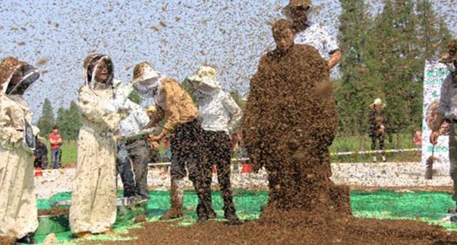 Cho gần 64 kg ong phủ quanh thân, người đàn ông lập kỷ lục thế giới mới - 1