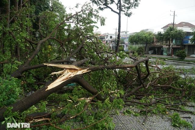 Đường phố Đà Nẵng ngổn ngang, cây xanh ngã đổ la liệt sau bão - 1