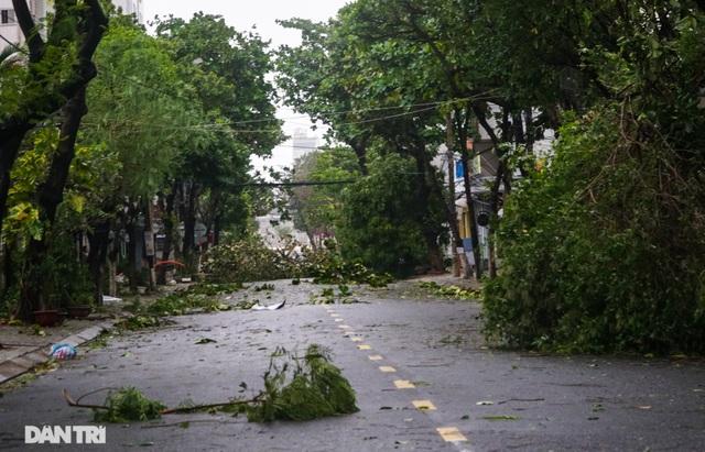 Đường phố Đà Nẵng ngổn ngang, cây xanh ngã đổ la liệt sau bão - 4