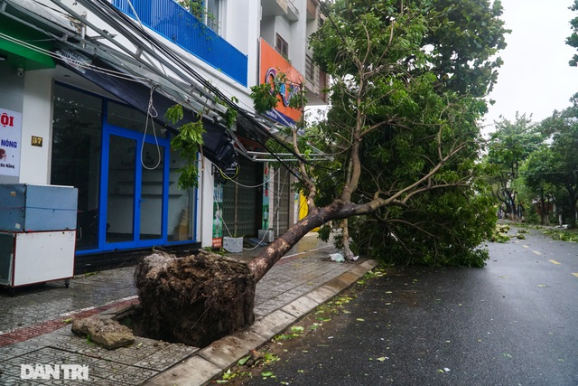 Đường phố Đà Nẵng ngổn ngang, cây xanh ngã đổ la liệt sau bão - 3