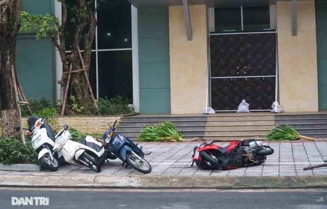 Đường phố Đà Nẵng ngổn ngang, cây xanh ngã đổ la liệt sau bão - 7