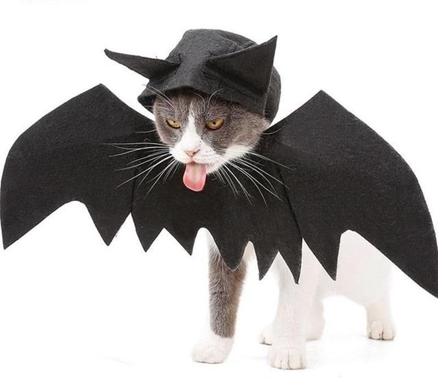 Chủ nhân rút hầu bao, chi đậm sắm đồ Halloween cho thú cưng - 2