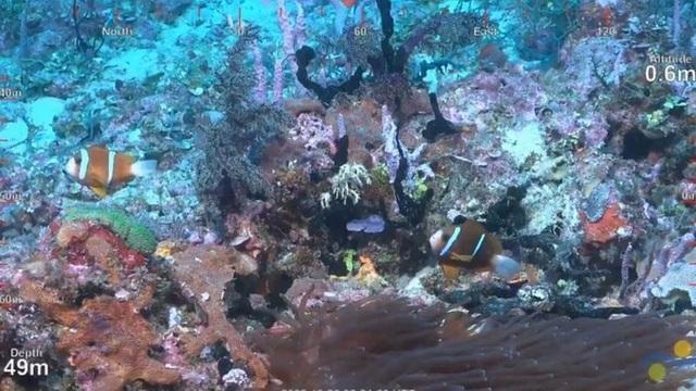Phát hiện rạn san hô cao nửa cây số ở Úc - 2