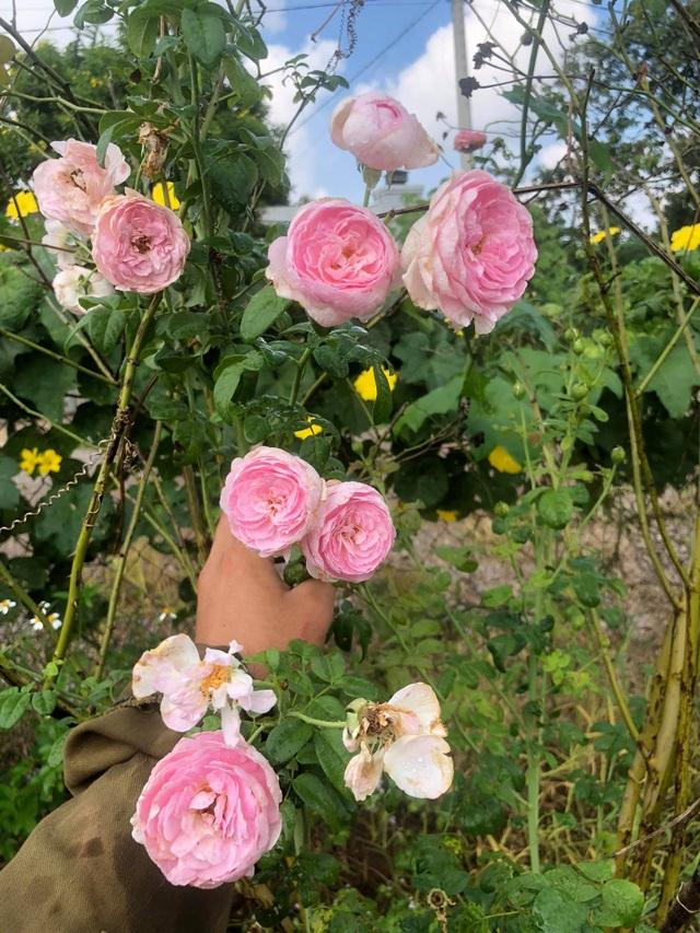 Khu vườn 2.000m2 với hơn 100 loại hoa hồng đẹp như cổ tích của 9X Đồng Nai - 2