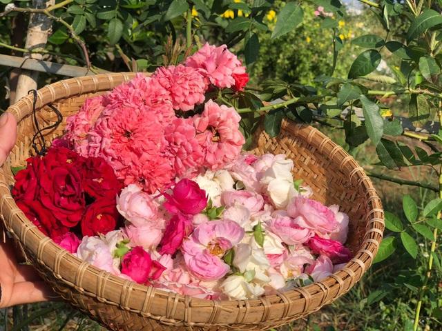 Khu vườn 2.000m2 với hơn 100 loại hoa hồng đẹp như cổ tích của 9X Đồng Nai - 13