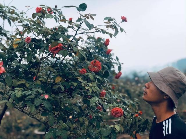 Khu vườn 2.000m2 với hơn 100 loại hoa hồng đẹp như cổ tích của 9X Đồng Nai - 1