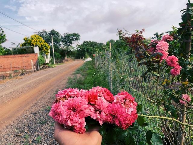 Khu vườn 2.000m2 với hơn 100 loại hoa hồng đẹp như cổ tích của 9X Đồng Nai - 3