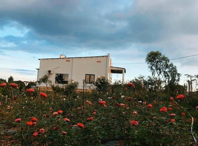 Khu vườn 2.000m2 với hơn 100 loại hoa hồng đẹp như cổ tích của 9X Đồng Nai - 6