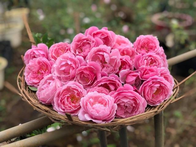 Khu vườn 2.000m2 với hơn 100 loại hoa hồng đẹp như cổ tích của 9X Đồng Nai - 11