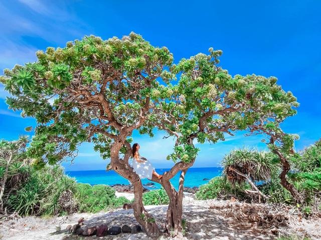 """Cây phong ba """"cô đơn"""" nổi tiếng ở đảo Lý Sơn bị quật gãy sau cơn bão - 3"""