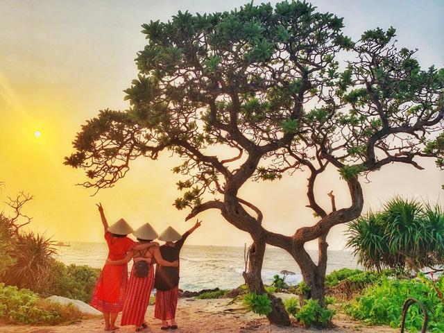 """Cây phong ba """"cô đơn"""" nổi tiếng ở đảo Lý Sơn bị quật gãy sau cơn bão - 6"""