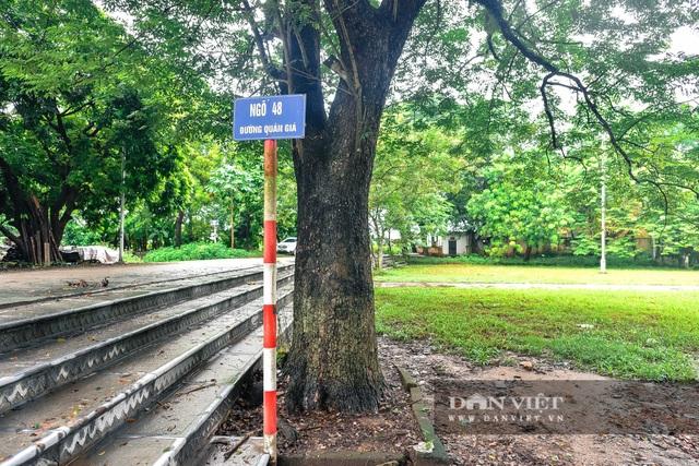 Chiêm ngưỡng cây sưa trăm tuổi ở Hà Nội, trả 60 tỷ đồng không bán - 10