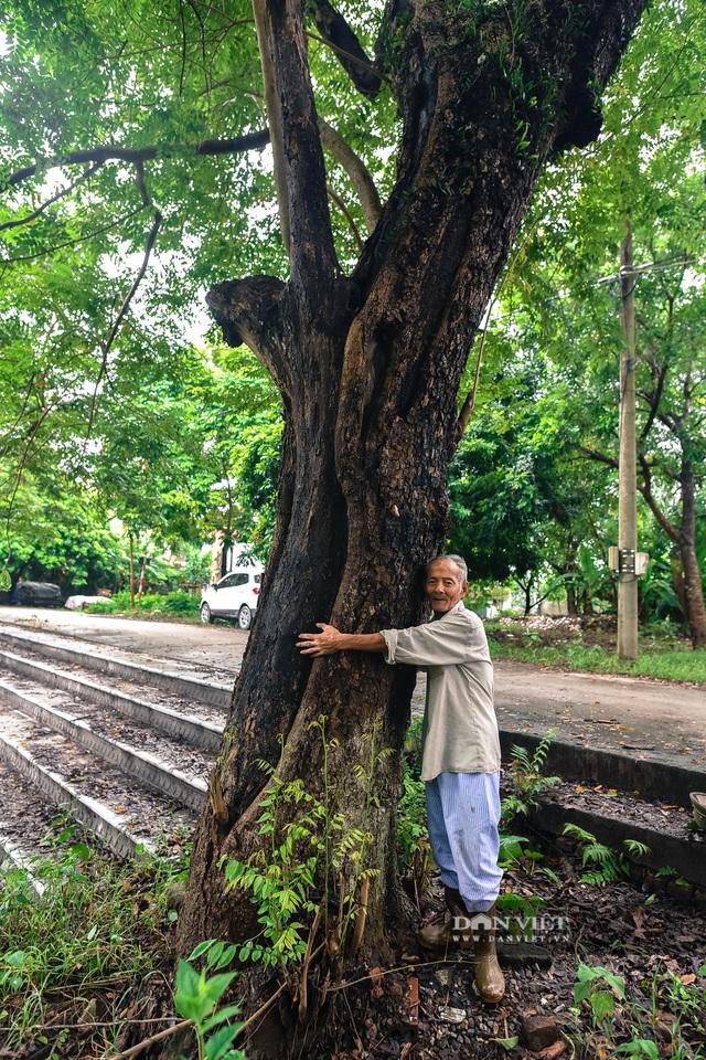 Chiêm ngưỡng cây sưa trăm tuổi ở Hà Nội, trả 60 tỷ đồng không bán - 4