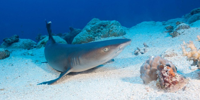 Du khách hãi hùng bị cá mập tấn công, cắn mất tay khi đang lặn biển - 1