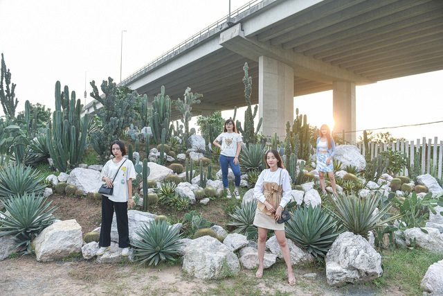 Lost in the cactus garden - the new check-in coordinate of Hanoi youth - 1