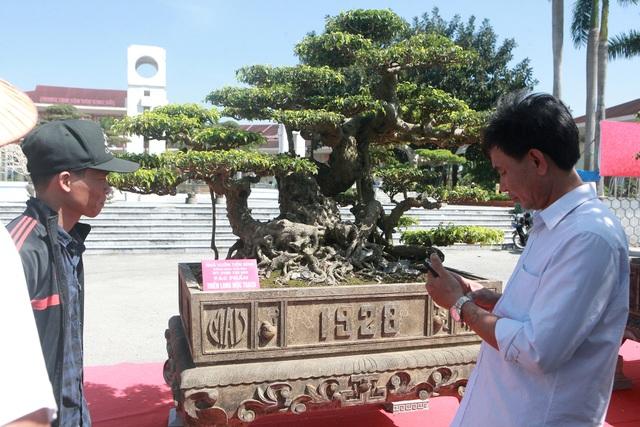"""""""Siêu cây"""" của nông dân Thái Bình được trả 10 tỷ đồng vẫn lắc đầu không bán - 2"""