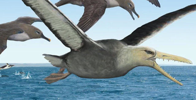 Hóa thạch 50 triệu năm tuổi có thể thuộc về loài chim lớn nhất biết bay - 1