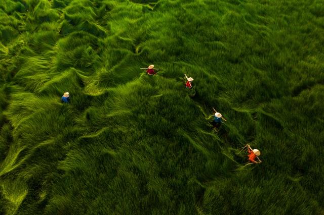 Những khoảnh khắc đẹp xao lòng của Việt Nam qua góc nhìn nhiếp ảnh - 1