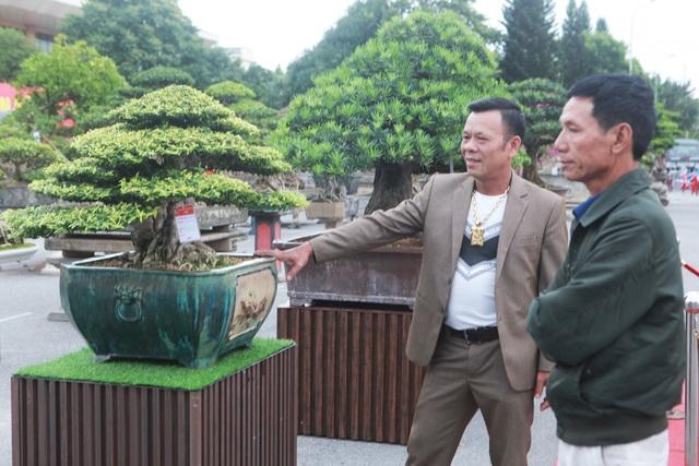 Chiêm ngưỡng cây mai chiếu thủy đoạt giải vàng có giá hơn 1 tỷ đồng - 3
