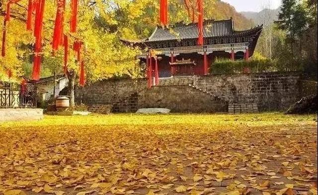 Cổ thụ hơn 1.400 năm nhuộm vàng rực sân chùa, thu hút 70.000 khách/ngày - 6