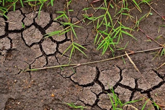 Nếu khí hậu tăng lên 2 độ C có thể giải phóng hàng tỷ tấn carbon trong đất - 1