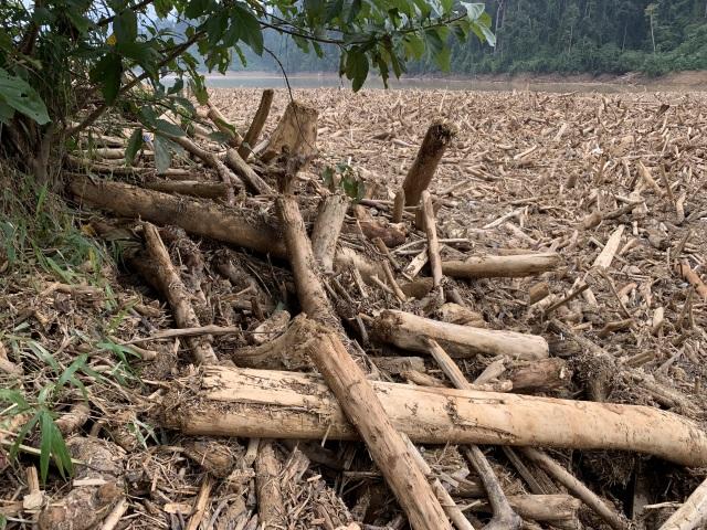 Bãi gỗ khổng lồ sau lũ: Gỗ quý hay củi rác? - 8