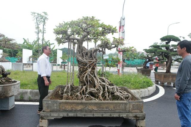 """Mãn nhãn cây đa dáng làng có giá 2 tỷ đồng """"độc nhất vô nhị"""" ở Hà Nội - 1"""