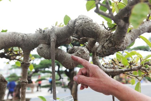 """Mãn nhãn cây đa dáng làng có giá 2 tỷ đồng """"độc nhất vô nhị"""" ở Hà Nội - 10"""