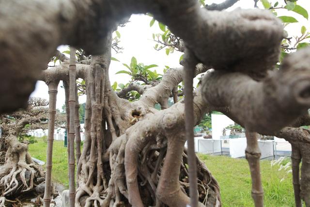 """Mãn nhãn cây đa dáng làng có giá 2 tỷ đồng """"độc nhất vô nhị"""" ở Hà Nội - 11"""