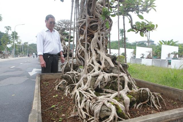 """Mãn nhãn cây đa dáng làng có giá 2 tỷ đồng """"độc nhất vô nhị"""" ở Hà Nội - 8"""