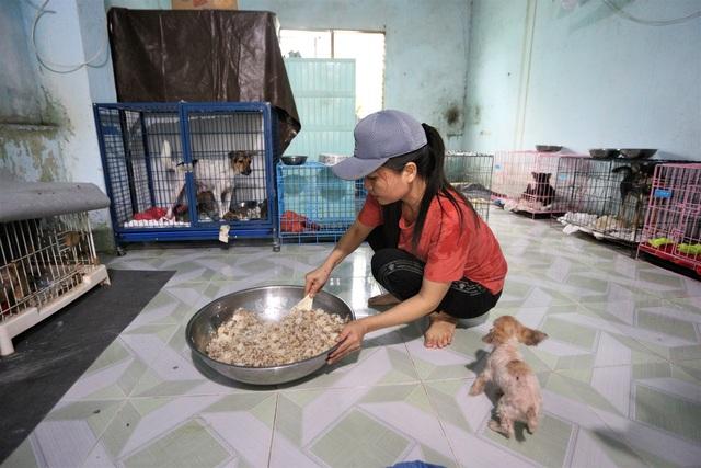 """Người """"mẹ"""" của những chú chó, mèo hoang ở Đà Nẵng - 1"""