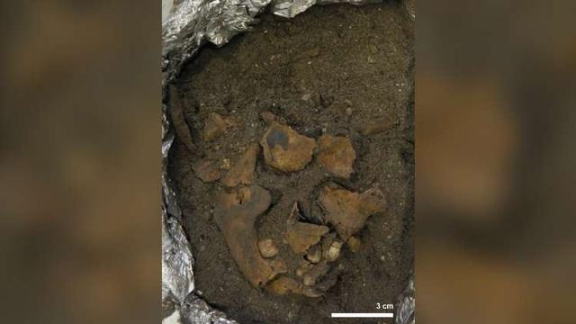 Phát hiện ngôi mộ niên đại 8.000 năm chứa hài cốt của em bé mất tứ chi - 2