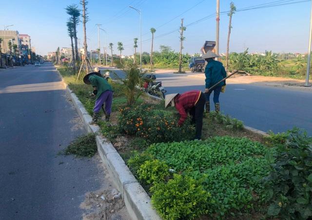 """Vụ cây xanh """"đột tử"""" ở Thanh Oai: Tức tốc nhổ bỏ, trồng thay thế cây mới - 5"""