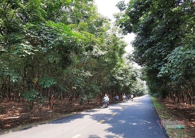 Đại biểu Quốc hội tỉnh Gia Lai nói cây cao su thải khí CO2, chuyên gia lên tiếng - 1