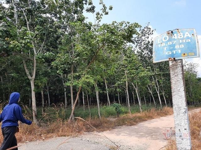 Đại biểu Quốc hội tỉnh Gia Lai nói cây cao su thải khí CO2, chuyên gia lên tiếng - 2
