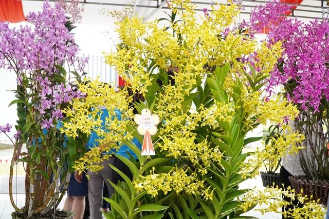 Hàng ngàn chậu lan khoe sắc tại hội thi hoa lan toàn quốc năm 2020 - 5