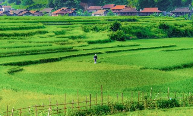 """Miền thảo nguyên xanh đẹp tựa """"tiên cảnh"""" cách Hà Nội chỉ hơn 100km - 14"""