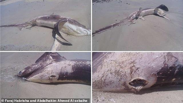 Cá mập chết dạt vào bờ, lật lưng phát hiện nguyên nhân kinh hoàng - 1