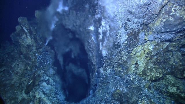 Loài tôm bất tử luộc không chết, có thể tồn tại ở môi trường 450 độ C - 5