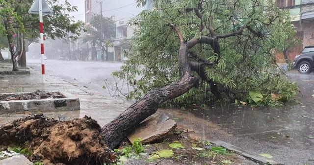 Hình ảnh bão số 12 thổi xiêu vẹo người đi đường, quật đổ cây xanh - 8