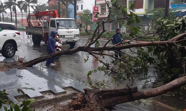 Hình ảnh bão số 12 thổi xiêu vẹo người đi đường, quật đổ cây xanh - 9