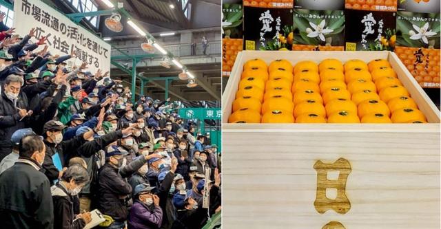 Choáng với thùng quýt Nhật Bản 20 kg được bán đấu giá hơn 200 triệu VND - 1