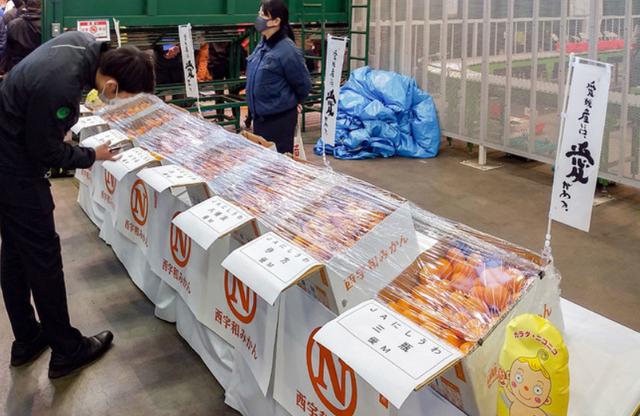 Choáng với thùng quýt Nhật Bản 20 kg được bán đấu giá hơn 200 triệu VND - 2