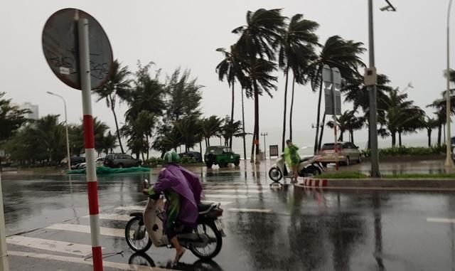 Hình ảnh bão số 12 thổi xiêu vẹo người đi đường, quật đổ cây xanh - 4
