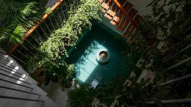 """""""Khu rừng nhiệt đới"""" nằm ẩn trong nhà phố khiến ai bước vào cũng trầm trồ - 1"""