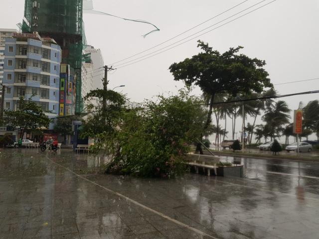 Hình ảnh bão số 12 thổi xiêu vẹo người đi đường, quật đổ cây xanh - 5