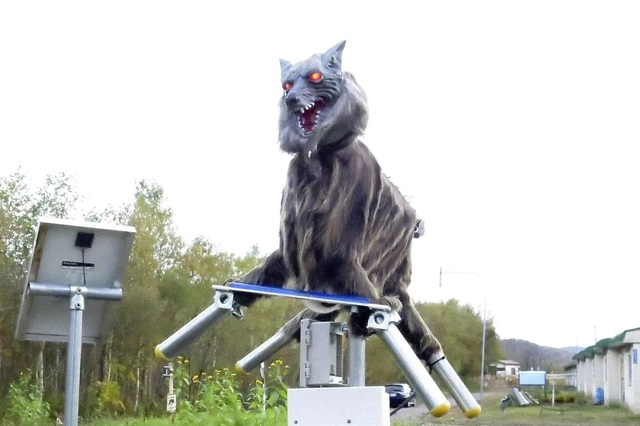 Nhật Bản sử dụng sói robot để xua đuổi và ngăn chặn gấu tấn công con người - 1