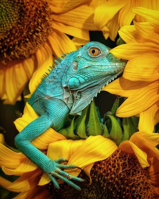 Ảnh đẹp nhất về động vật trong năm 2020 gọi tên nhiếp ảnh gia Việt Nam - 1